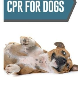 cpr for dogs